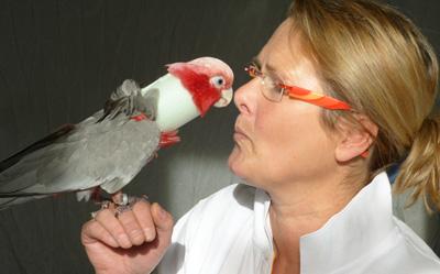 Vogeltierarzt Dr. Petersen in Soltau, Heidekreis