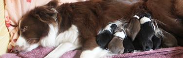 zuchtmanagement-tierarzt-petersen-soltau