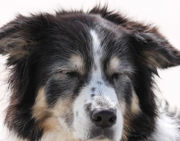 zuchtmanagement-tierarzt-soltau-petersen